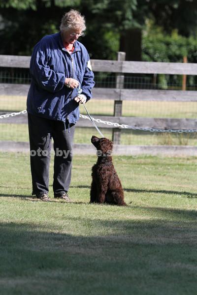 Bird Dog Conformation-IWSCOPS Aug 24, 2012