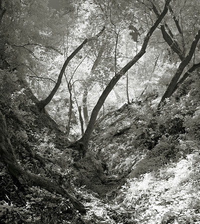 Coal Creek Preserve in IR