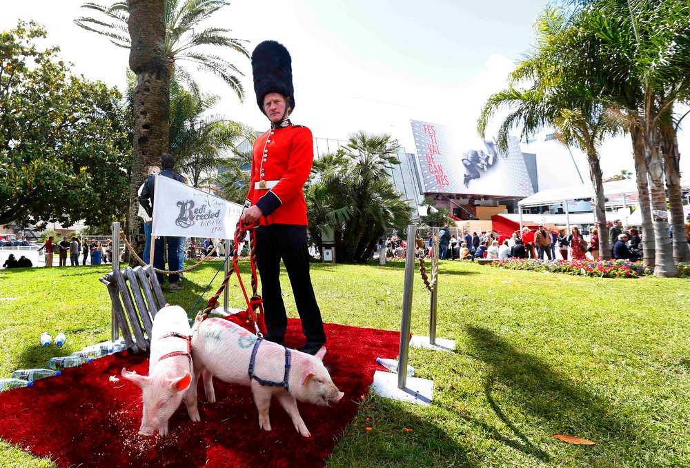 . A man dressed as a Britain\'s Guard of Honour and keeping pigs on a leash perform outside the Festival Palace while promoting the movie \'Redirected\' during the 66th Cannes Film Festival in Cannes May 19, 2013.    REUTERS/Yves Herman