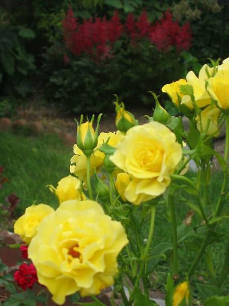 garden-2006-07-0474_std.jpg