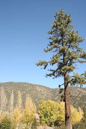 Country Trip Nov. 2007