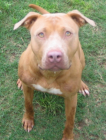 Jackie A464663 — ADOPTED 12/18/07!
