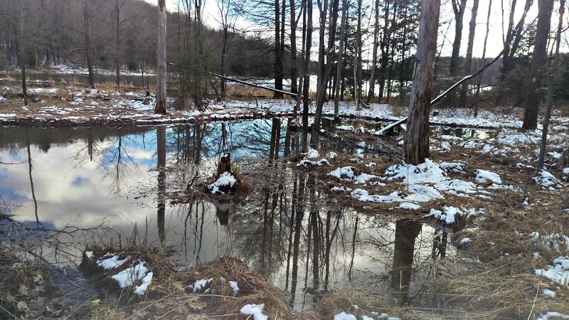 Beaver Pond at Hemlock Lake