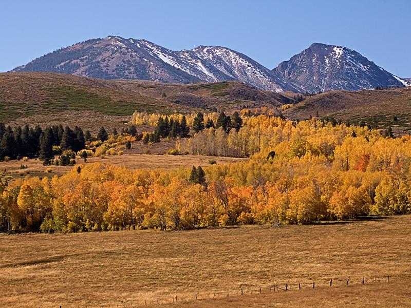 Fall Colors at Conway Summit