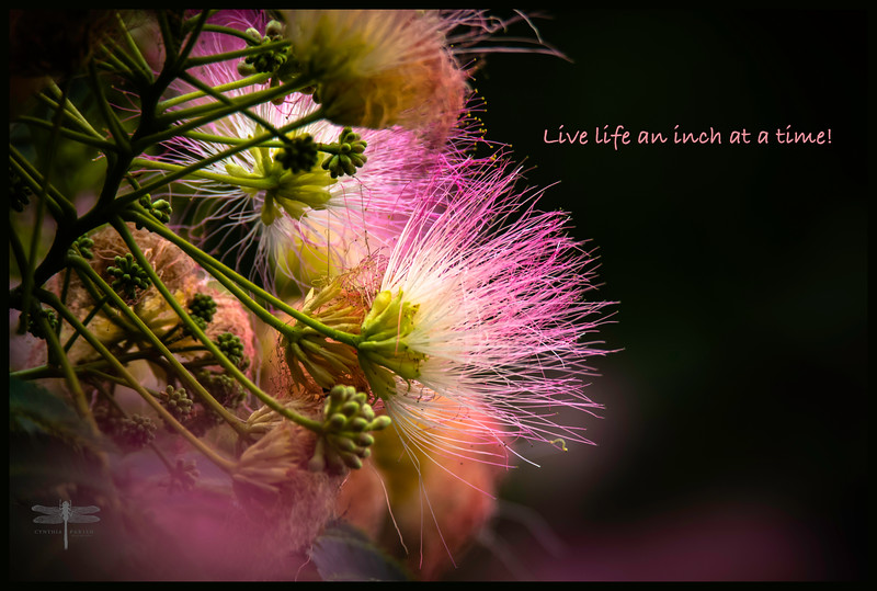 Live Life an Inch at a Time_664A0095.jpg