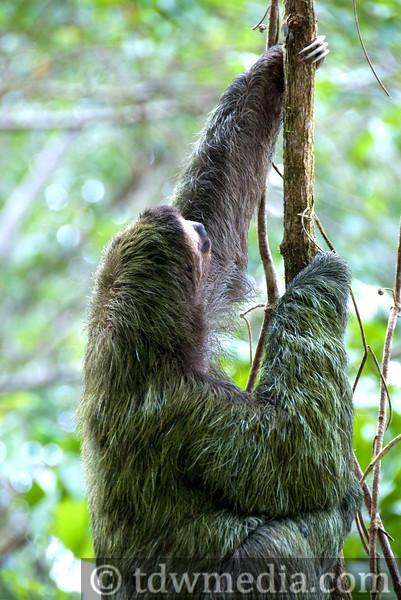 Costa Rica Tourism Board 9.jpg