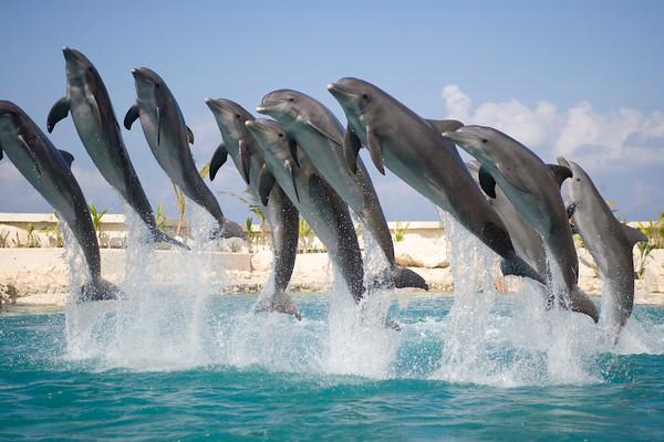 Dolphinaris Cozumel 4.jpg