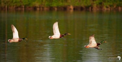 Three in Flight