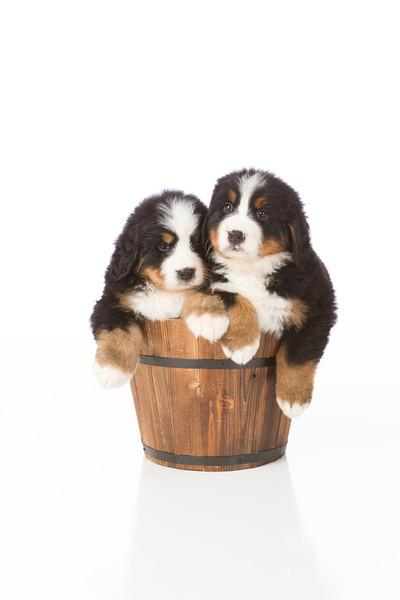 2013-Pearson Pups-Jun02-0464.jpg