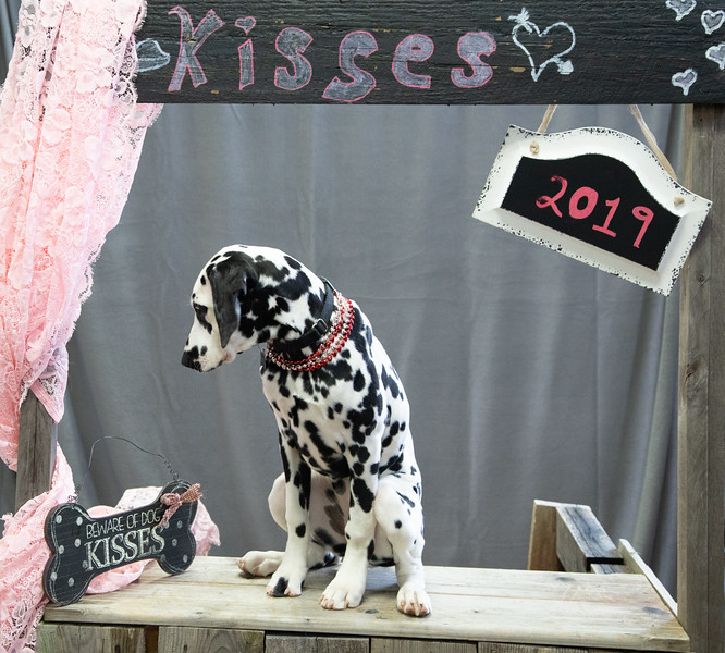 GDU Kissing Booth 2019-22.jpg