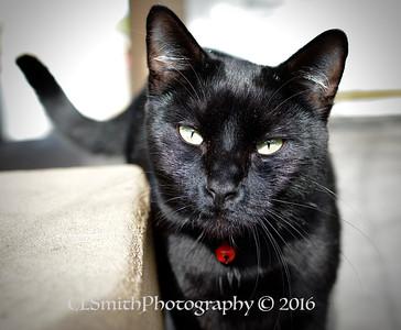 Laurelhurst Cat Sitter Pets