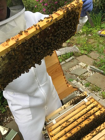 Three BeeHive Management May 23 2017