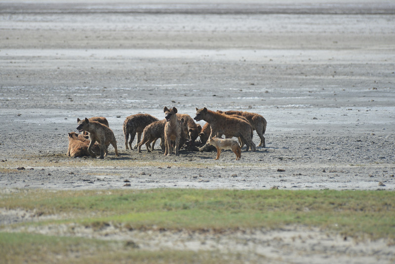 East Africa Safari 411.jpg