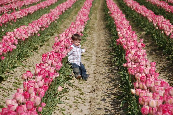 Tulips 2009