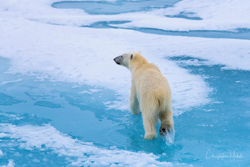 Arctic Melt for Bears.jpg