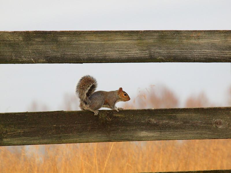 Squirrel-008.JPG