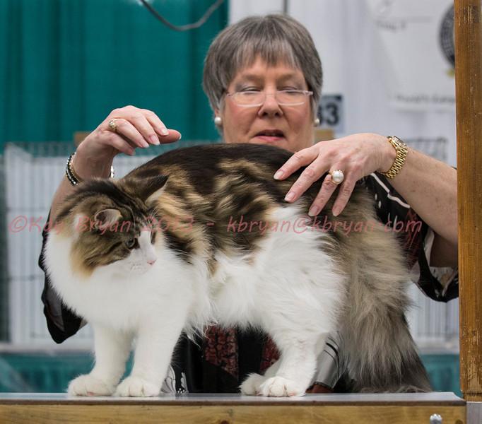 CatShow2014023_1.jpg
