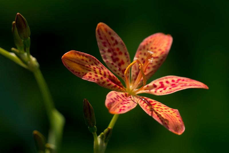 Flower_7748LowRes.jpg