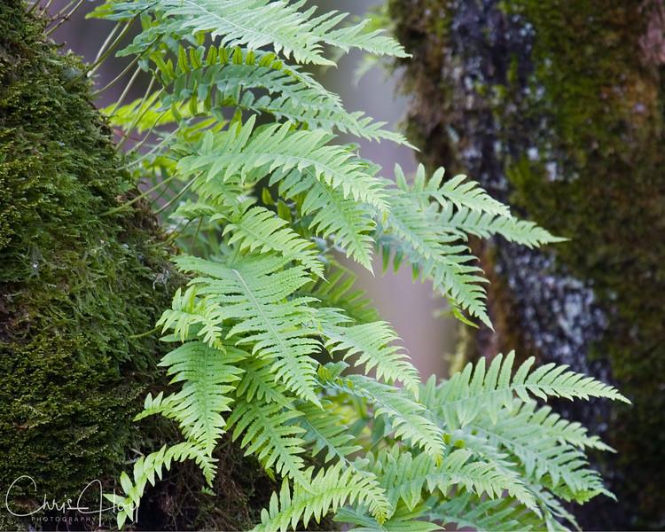 fern tree.jpg