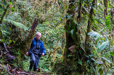 Ecuador - Eastern Andes cloud forest