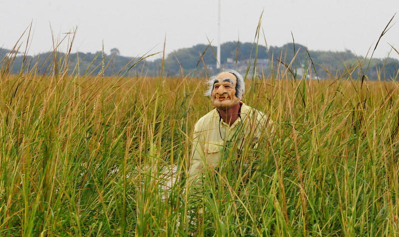 Old Man Grass_3.jpg