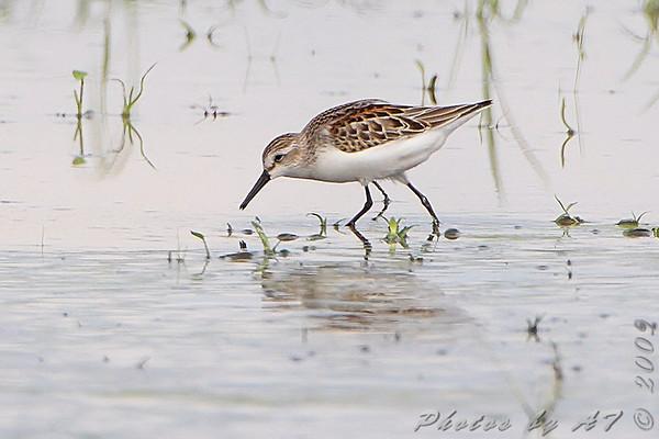 2009-08-18 Riverlands Migratory Bird Sanctuary