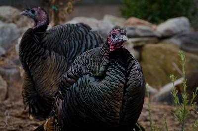 2012-02 - Hogle Zoo