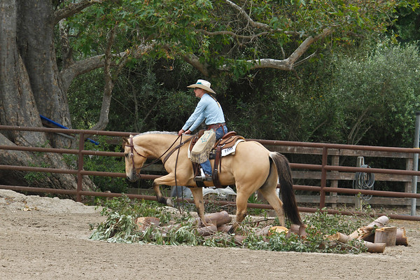 Ranch Trail Jr Horse