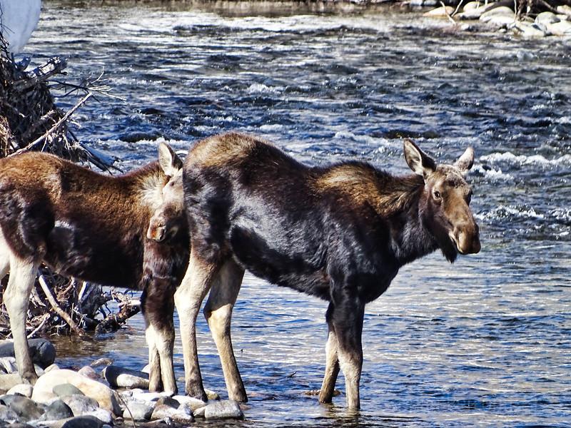 Moose Ketchum, Idaho