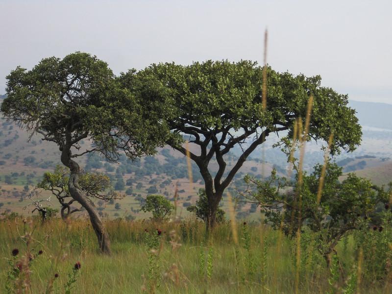 Rwanda_17_ixus-9417.jpg
