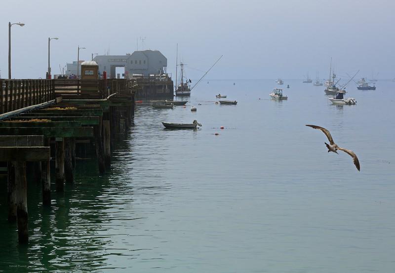 Avila Harbor