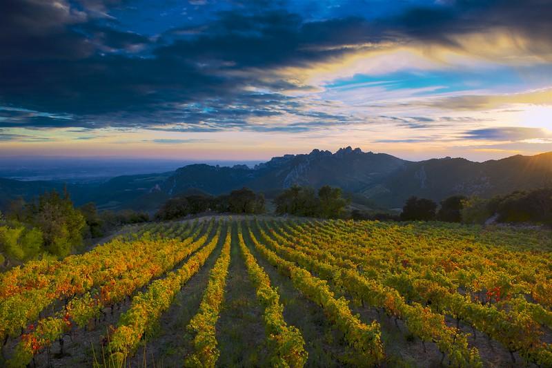 Vineyard overlooking the Dentelles, France