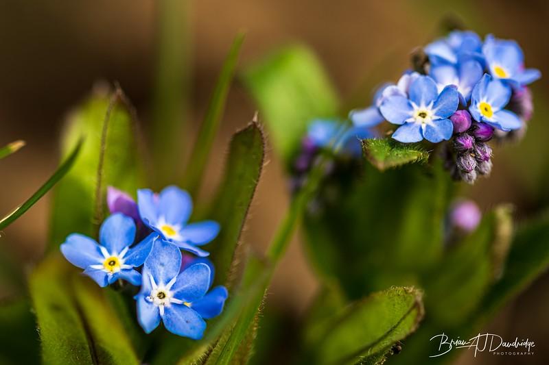 Macro_Spring-flowers-1446.jpg