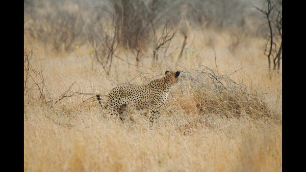 Kruger - Day 15 - Oct 27