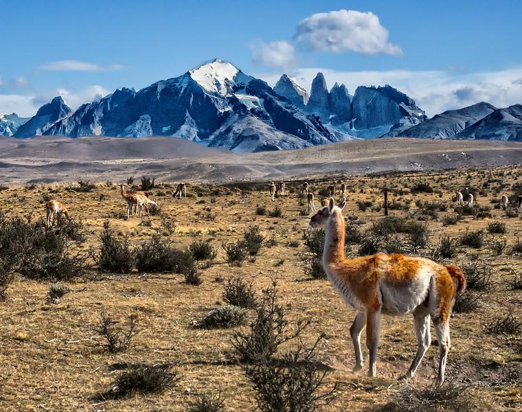 0604_Torres del Paine_19x15.MG_2460-3.jpg