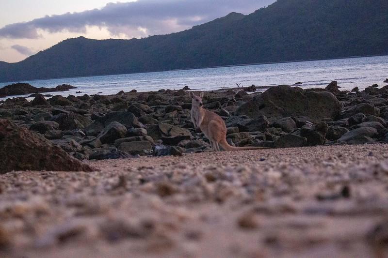 Australia_485.jpg
