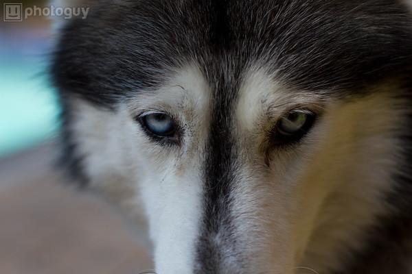 0002-Sierra Dog
