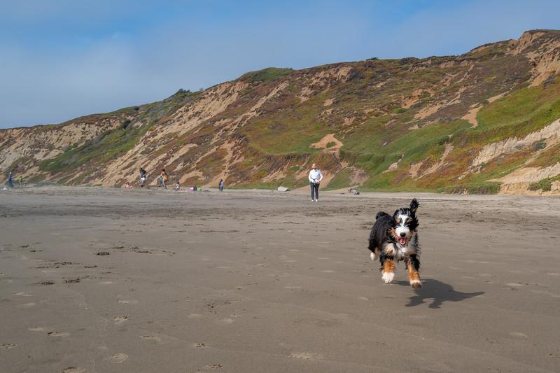 ocean beach quarantine 1159275-8-20.jpg