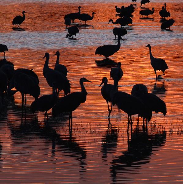 Crane silhouettes_0007118.jpg