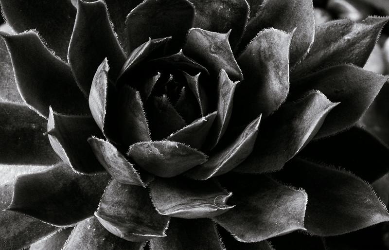 Succulent 512-.jpg