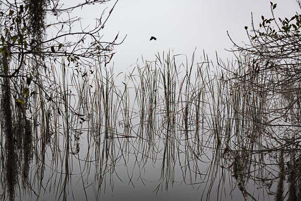 Foggy Morning, Lake Hollingsworth.jpg