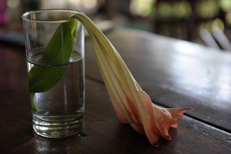 costa_rica_wilted_flower.jpg