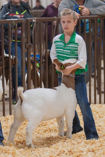 kay_county_showdown_goats_20191207-28.jpg