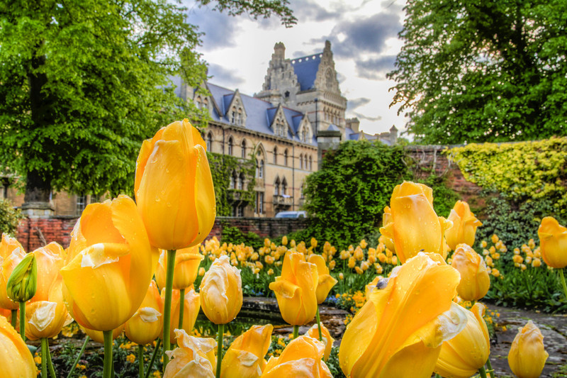 hogworth flowers.jpg