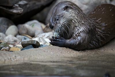 2011-07-27 Detroit Zoo