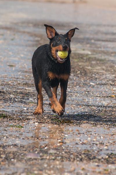 honden-05625.jpg