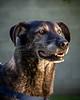RescuedogsCanon_EOS_5D_Mark_III-2727