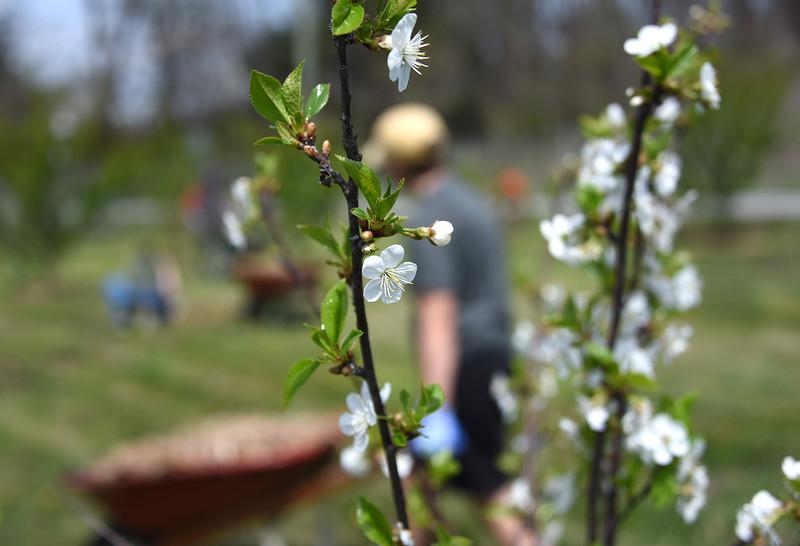 Blossoms_FruitTrees_ADJ_746.jpg