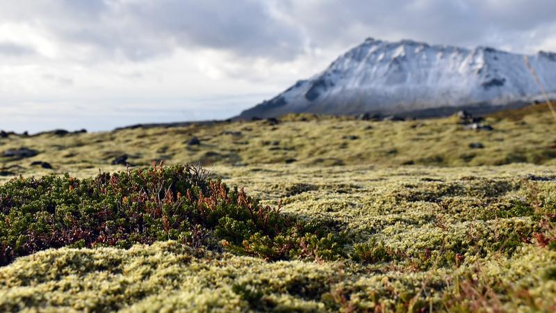 Iceland_2015_10_03_11_55_14.jpg