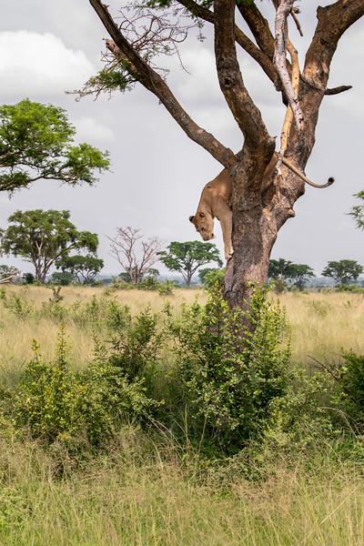 Uganda_T_QE-1541.jpg